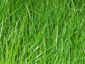 Фотографии ландшафта с травосмесью Парковая