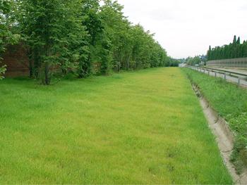 Фотографии ландшафта с травосмесью Придорожная