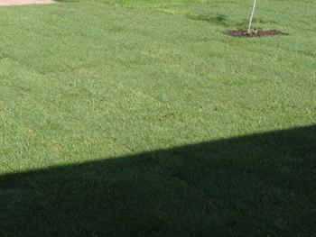 Фотографии ландшафта с травосмесью «Теневая»