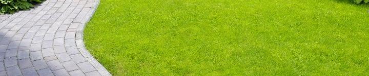 Устройство газона может быть самым разным. Газоны бывают декоративными, спортивными и специального назначения