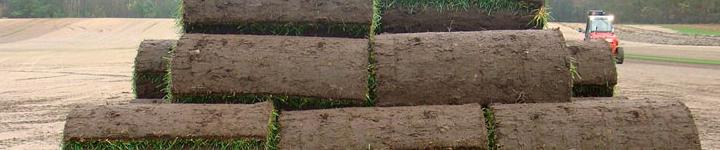 Мы делаем рулонные газоны, которые в самые сжатые сроки создают великолепный ландшафтный дизайн.