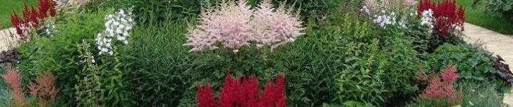 Цветники сегодня - это неотъемлемая часть оформления участков.  Для того чтобы они радовали глаз с ранней весны и до поздней осени, растения для них должны быть подобраны очень грамотно. Устройство цветников является целой наукой, так как их оформление и обустройство требует определенных знаний и трудовых затрат.