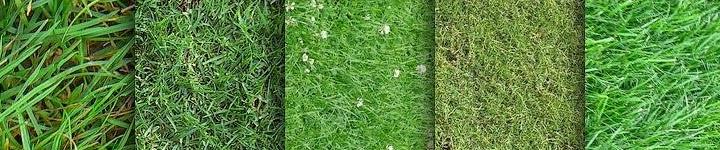 Широкий выбор газонной травы