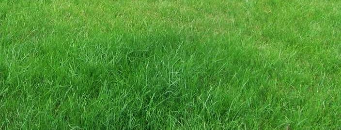 Ландшафта с травосмесью Быстровсходящая: