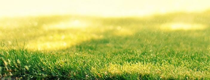 Ландшафт с травосмесью Солнцеустойчивая: